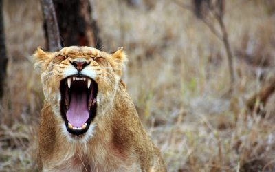 Omgaan met boosheid